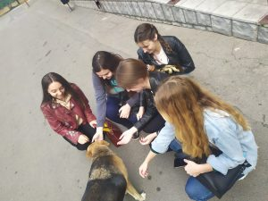 Допомога бездомним тваринам
